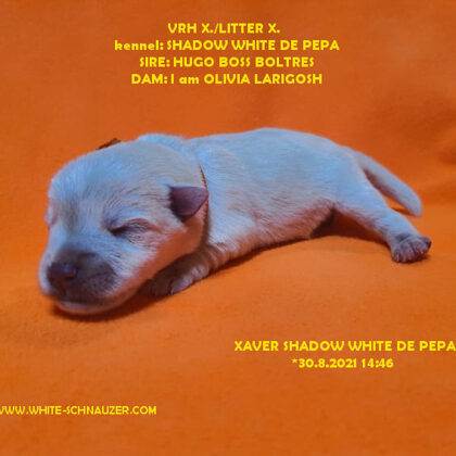 Xaver Shadow White de Pepa 2.9.2021